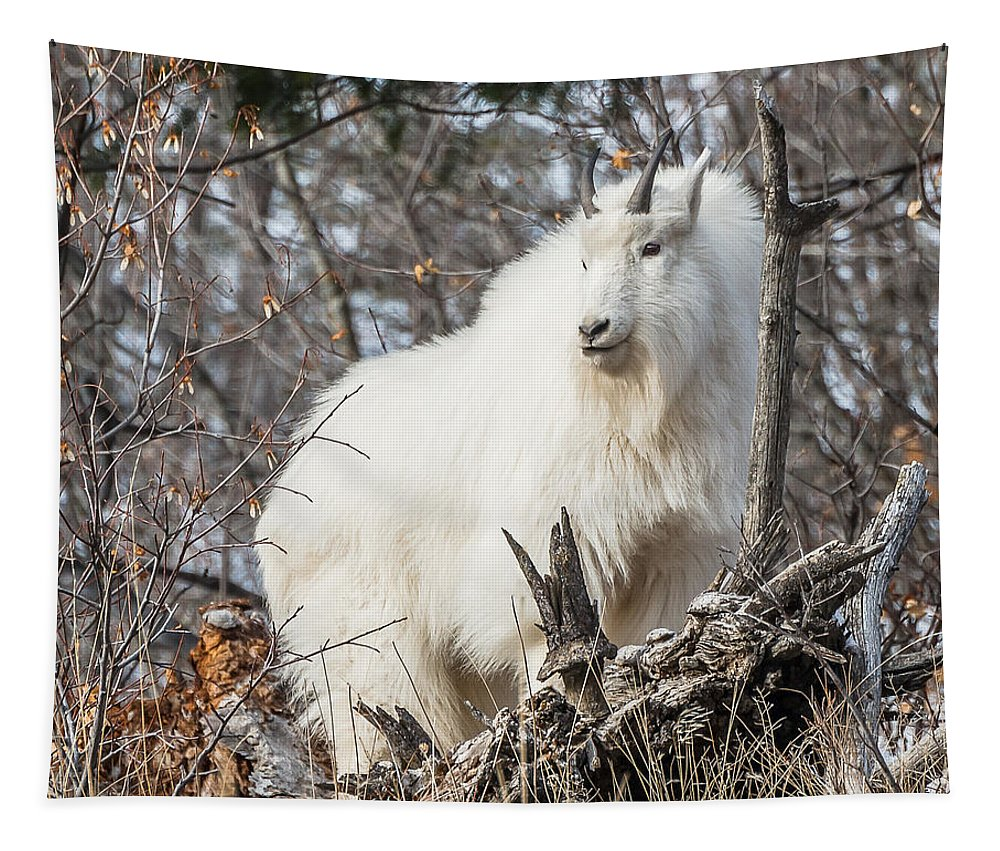 Rocky Mountain Goat Tapestry featuring the photograph Mountain Goat Pride by Yeates Photography