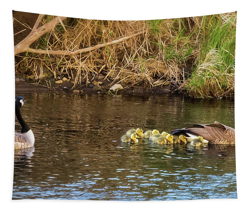 Dusky Canada Geese Tapestry featuring the photograph Moving The Brood by Belinda Greb