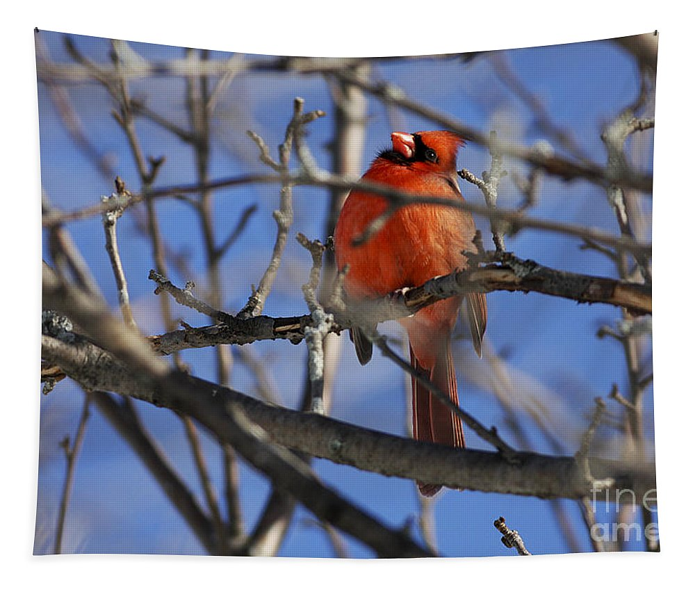 Bird Tapestry featuring the photograph Mr. Red Beauty by Deborah Benoit