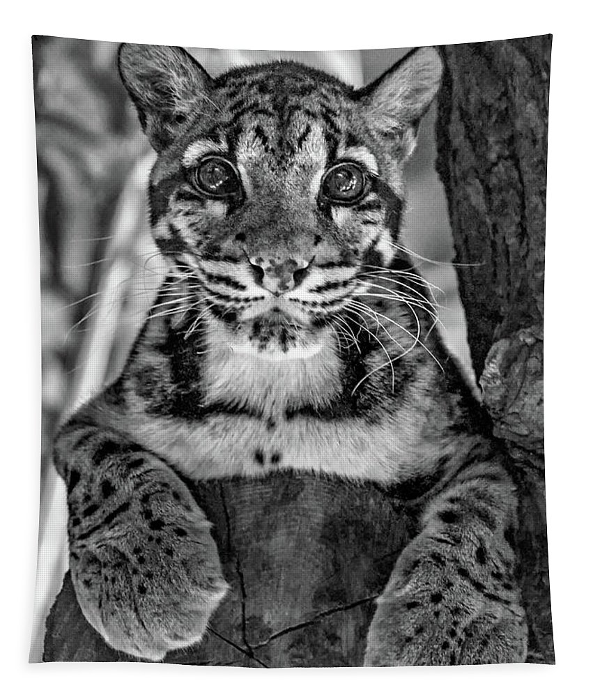 Clouded Leopard Tapestry featuring the photograph Ms Paws Monochrome by Steve Harrington