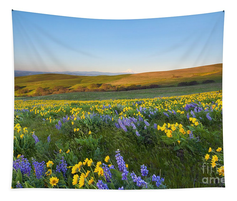 Wildflowers Tapestry featuring the photograph Mt. Hood Wildflower Morning by Mike Dawson