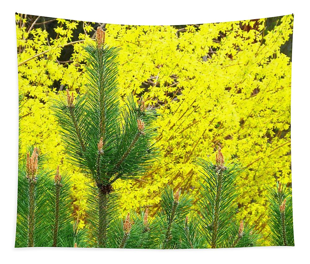 Pine Tapestry featuring the photograph Mugo Pine And Forsythia by Will Borden