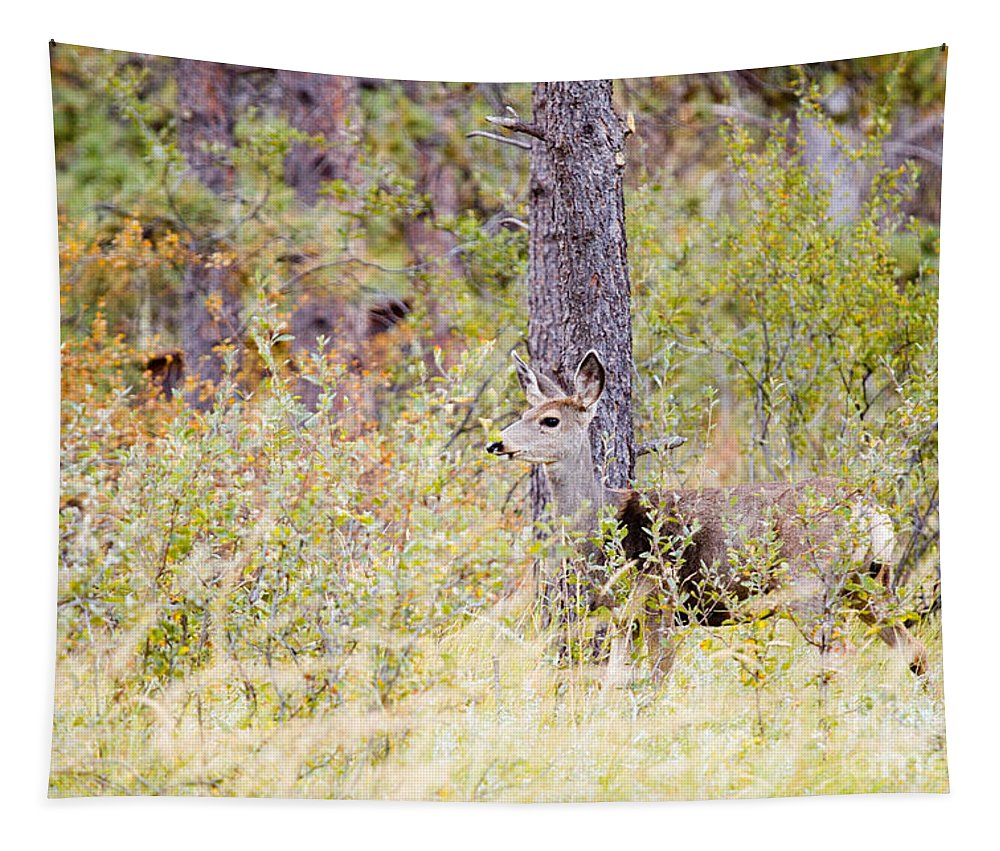 Deer Tapestry featuring the photograph Mule Deer Doe In The Pike National Forest by Steve Krull
