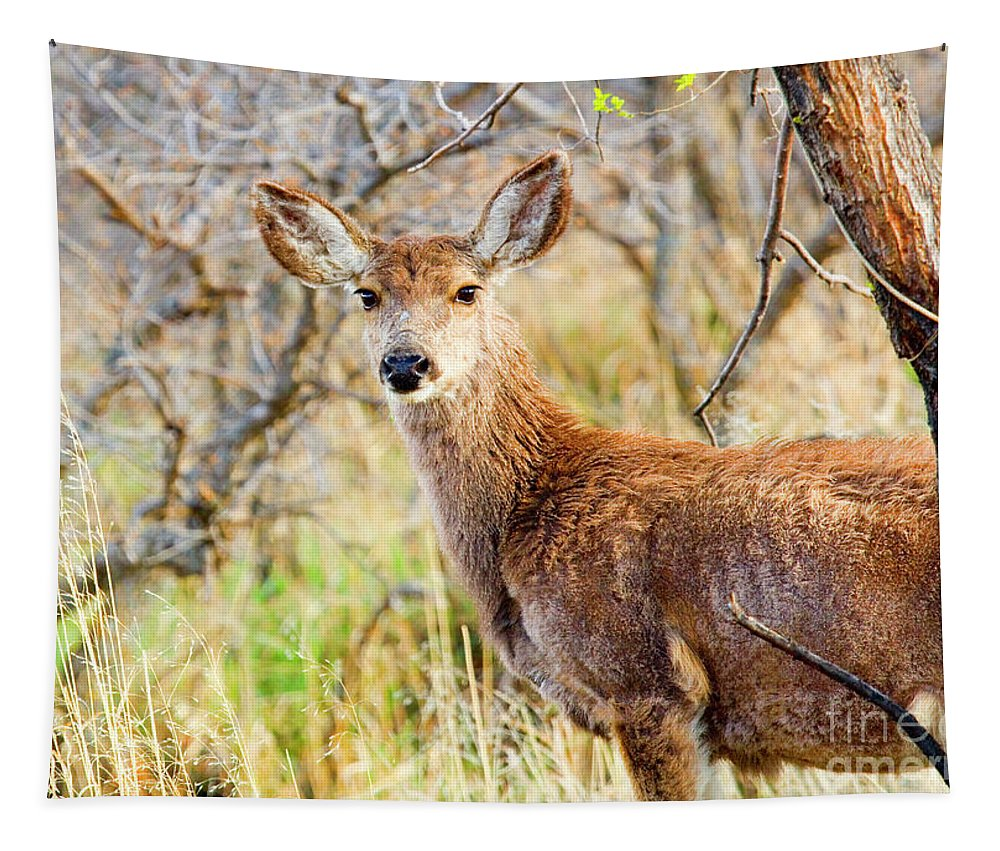 Animals Tapestry featuring the photograph Mule Deer Posing In The Colorado Spring Afternoon by Steve Krull