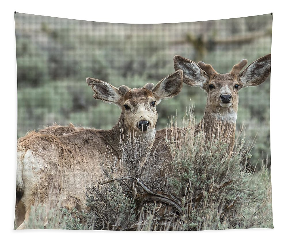 Velvet Tapestry featuring the photograph Mule Deer Visitors by Yeates Photography