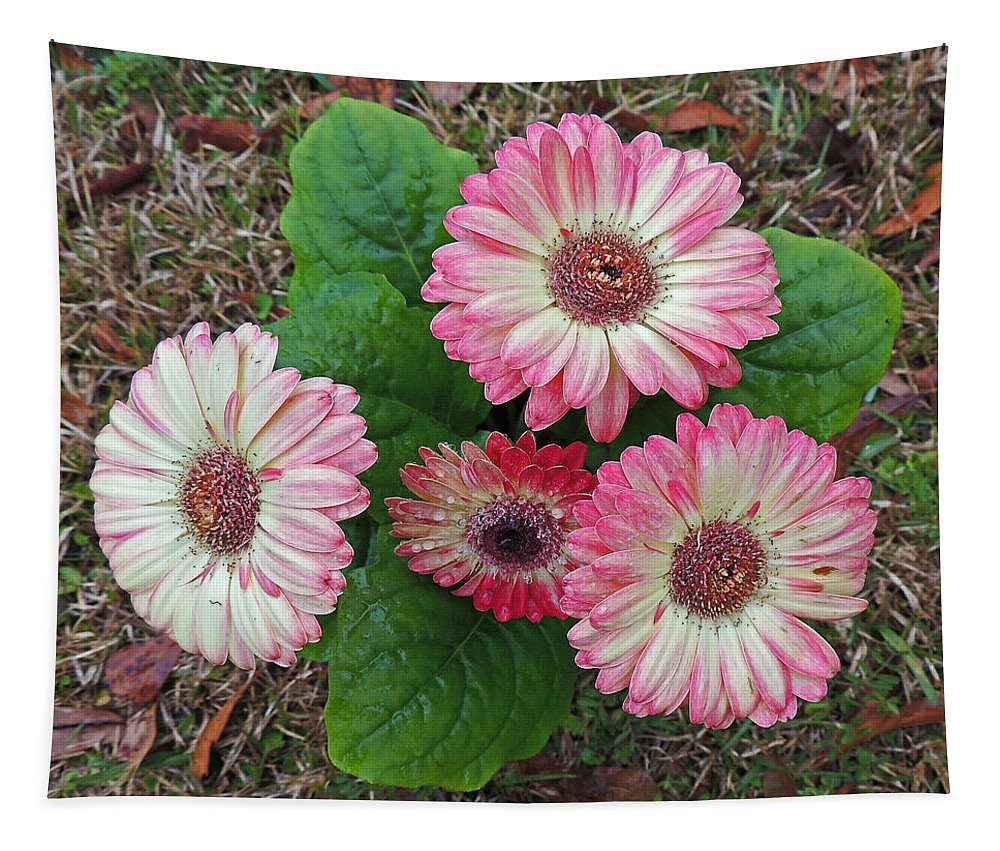 Photographic Print Tapestry featuring the photograph Multicolored Gerberas by Marian Bell