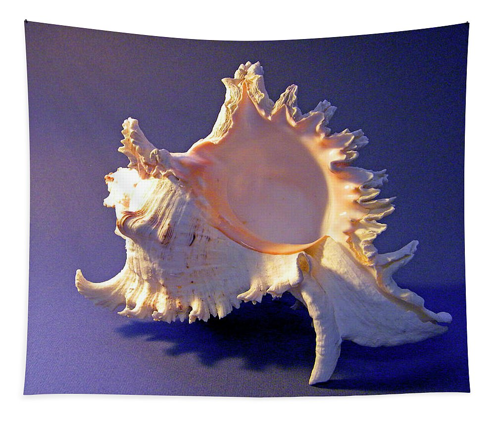 Frank Wilson Tapestry featuring the photograph Murex Ramosus Seashell by Frank Wilson
