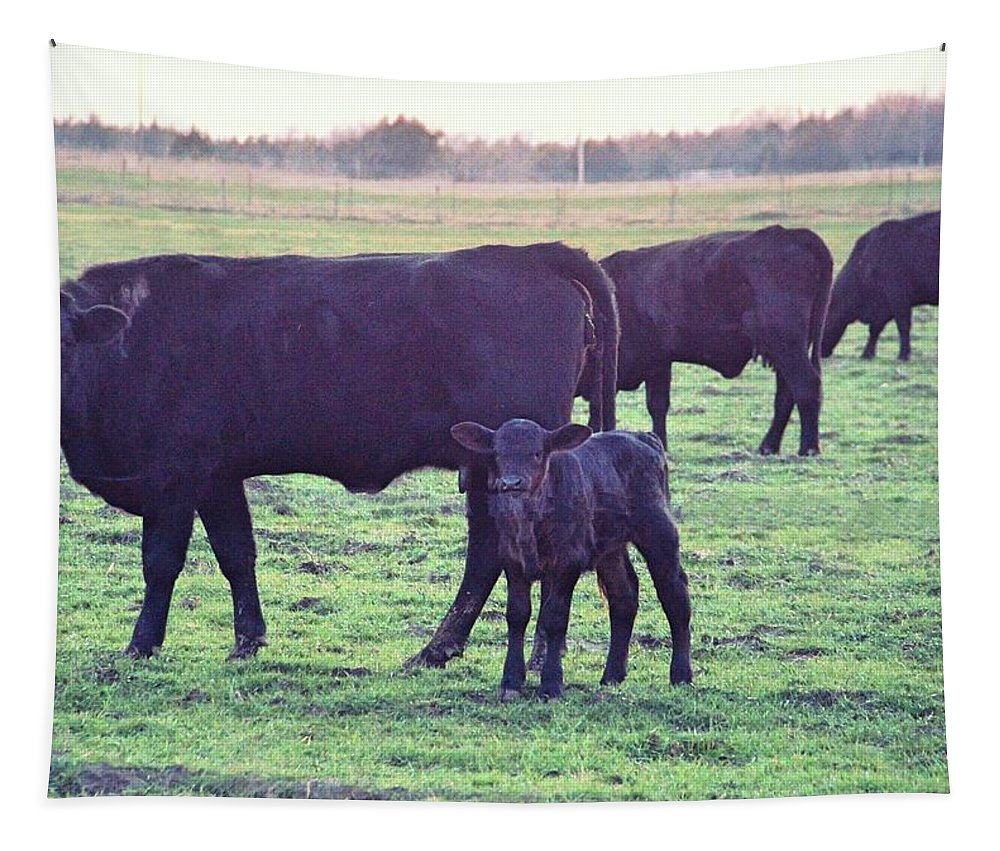 Cow Tapestry featuring the photograph My Calf by Linda James