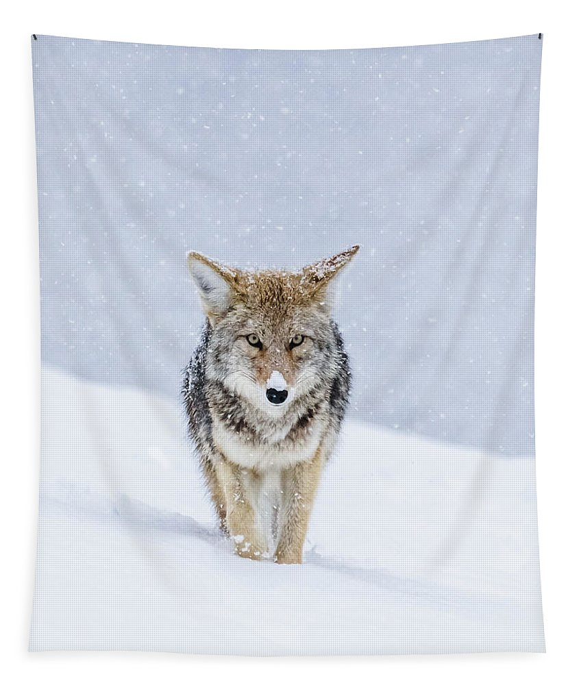 Coyote Tapestry featuring the photograph My Eyes Are On You by Yeates Photography