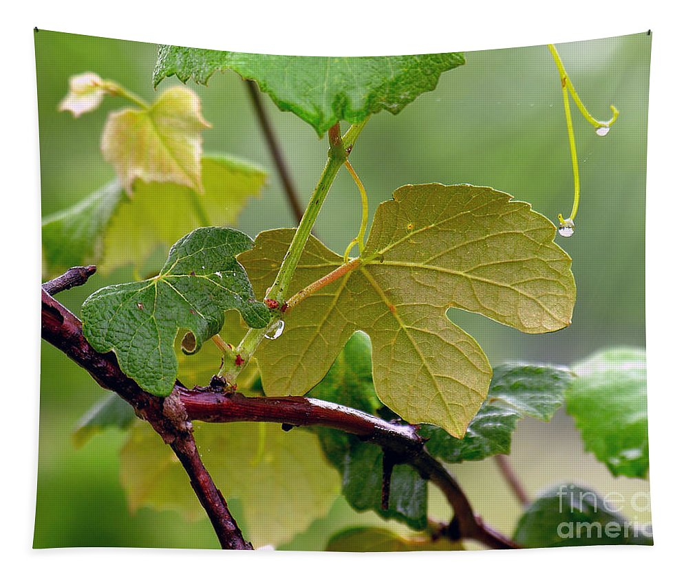 Grapevine Tapestry featuring the photograph My Grapvine by Robert Meanor