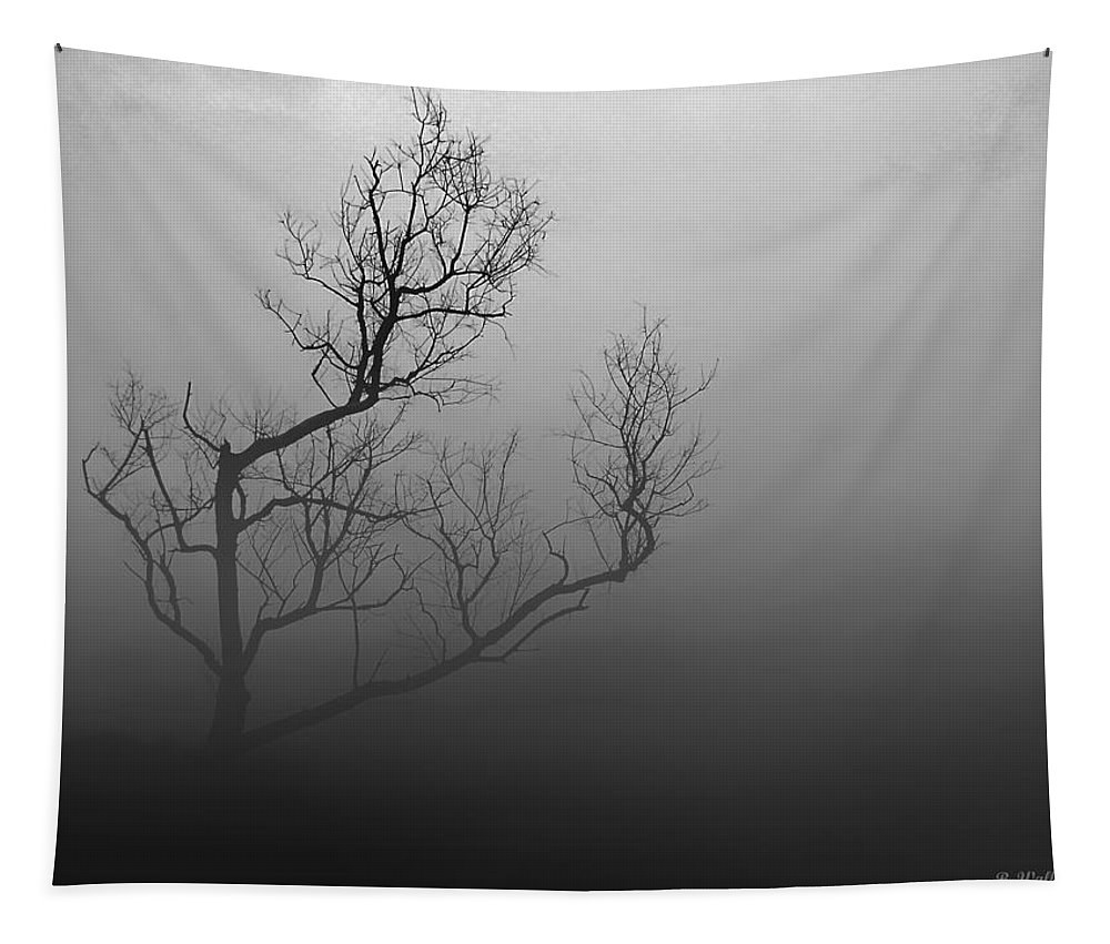 2d Tapestry featuring the photograph Mysterious Tree by Brian Wallace
