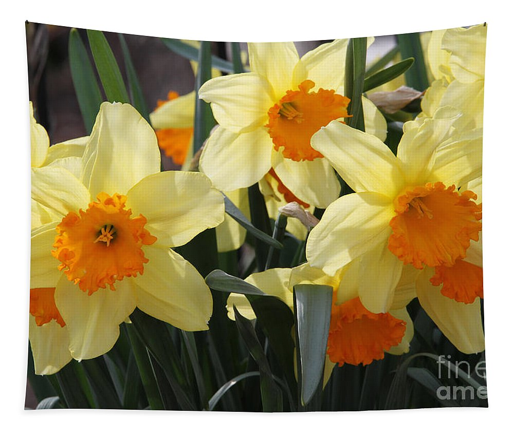 Narcissus Fortissimo Tapestry featuring the photograph Narcissus Fortissimo by Judy Whitton