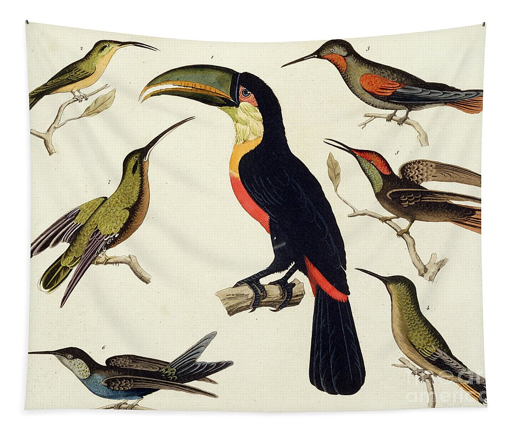 Toucan Tapestry featuring the drawing Native Birds, Including The Toucan From The Amazon, Brazil by V Raineri