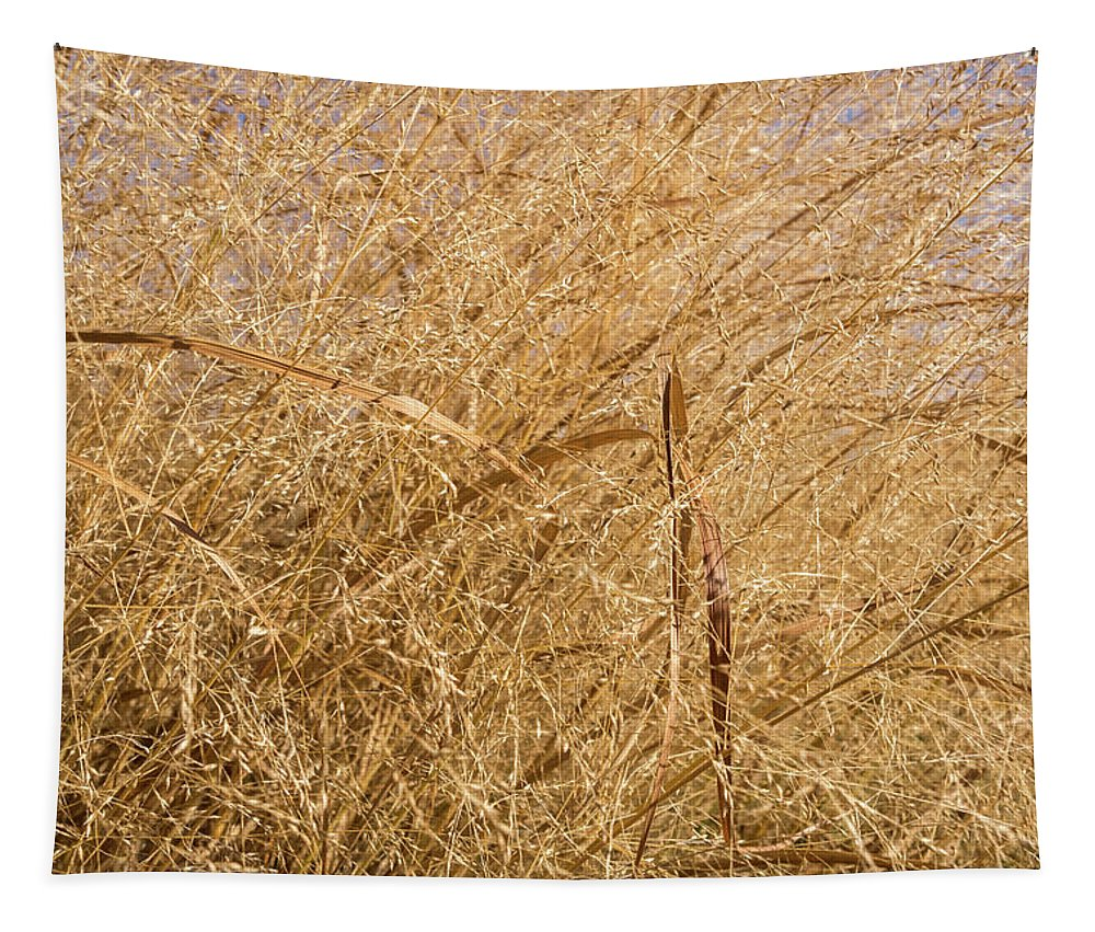 Georgia Mizuleva Tapestry featuring the photograph Natural Abstracts - Elaborate Shapes And Patterns In The Golden Grass by Georgia Mizuleva