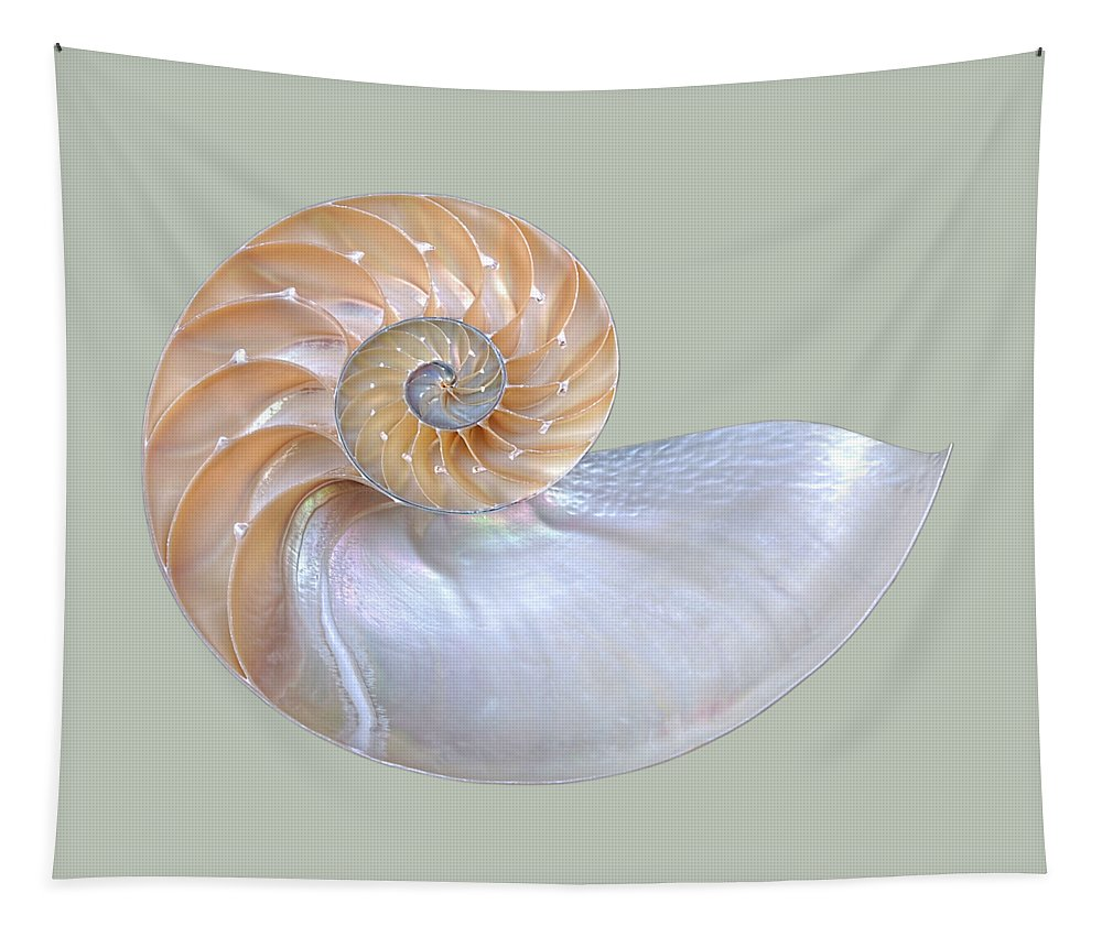 Nautilus Shell Tapestry featuring the photograph Natural Nautilus Seashell On White by Gill Billington