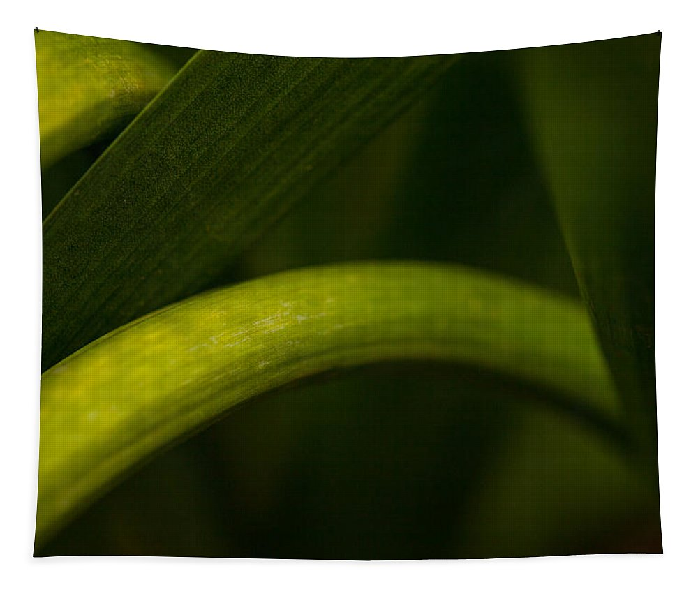 Nature Bends Tapestry featuring the photograph Nature Bends by Karol Livote