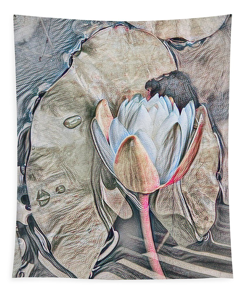 Everglades Tapestry featuring the photograph Nature's Softness by Debra and Dave Vanderlaan