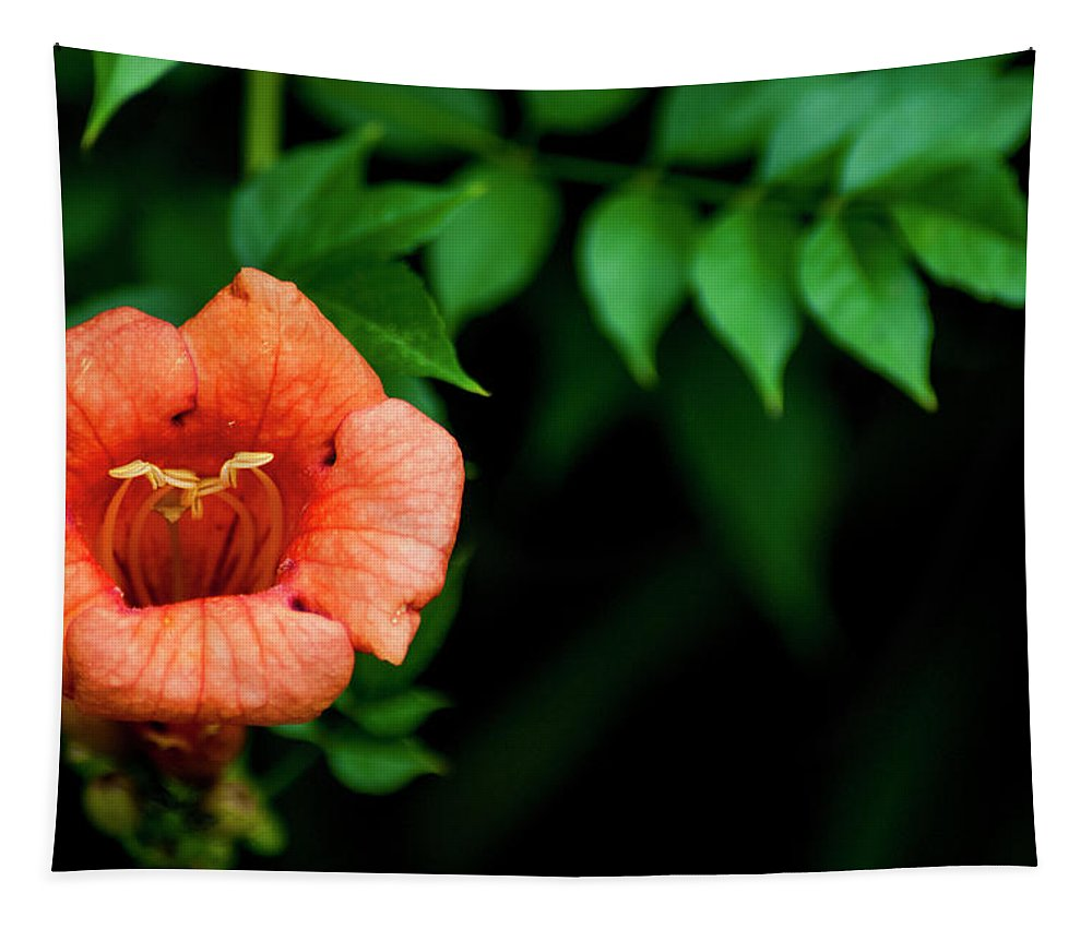 Trumpet Vine Tapestry featuring the photograph Natures Trumpet by Annette Persinger