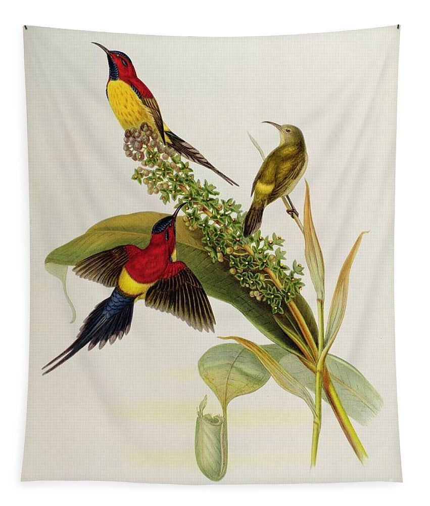 Nectarinia Tapestry featuring the painting Nectarinia Gouldae by John Gould