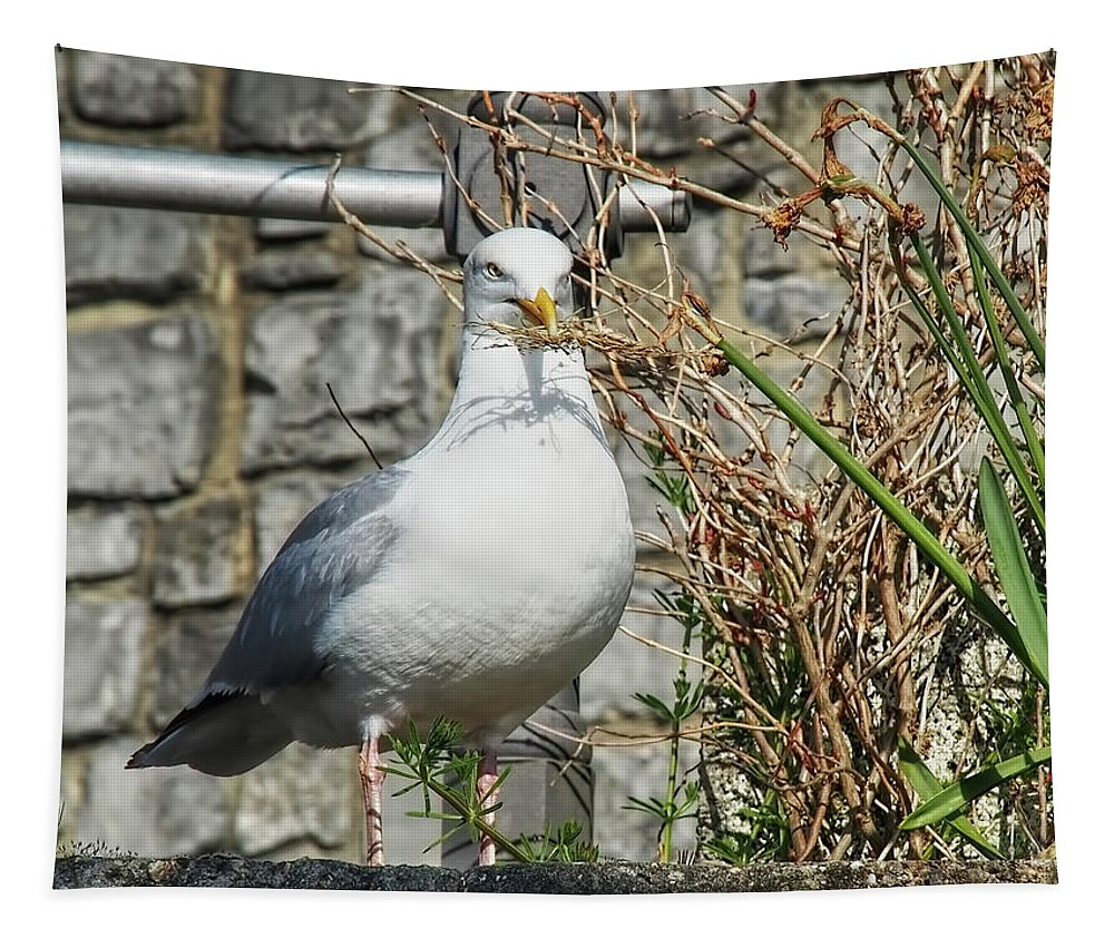 Seagull Tapestry featuring the photograph Nest Building Time by Susie Peek