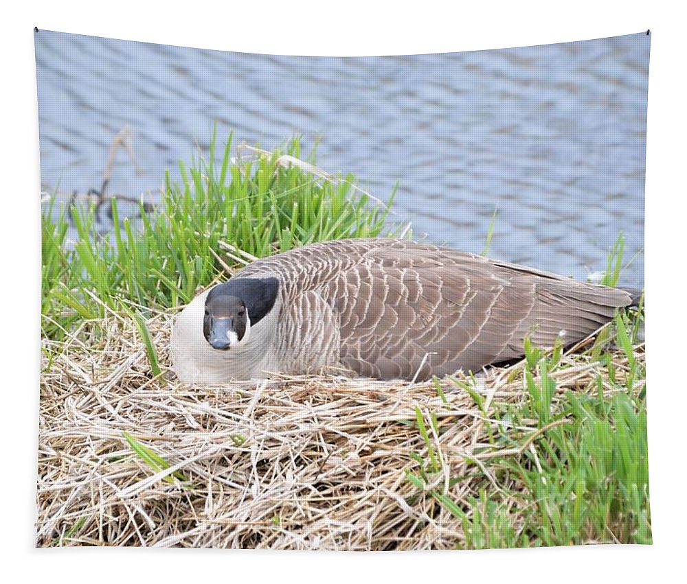 Goose Tapestry featuring the photograph Nesting Goose by Bonfire Photography