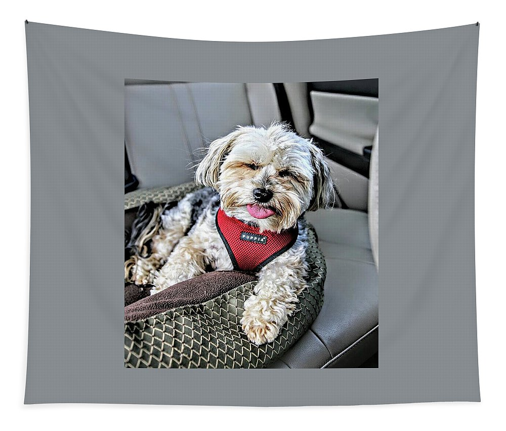 Morkie Tapestry featuring the photograph Neto by Keri Butcher