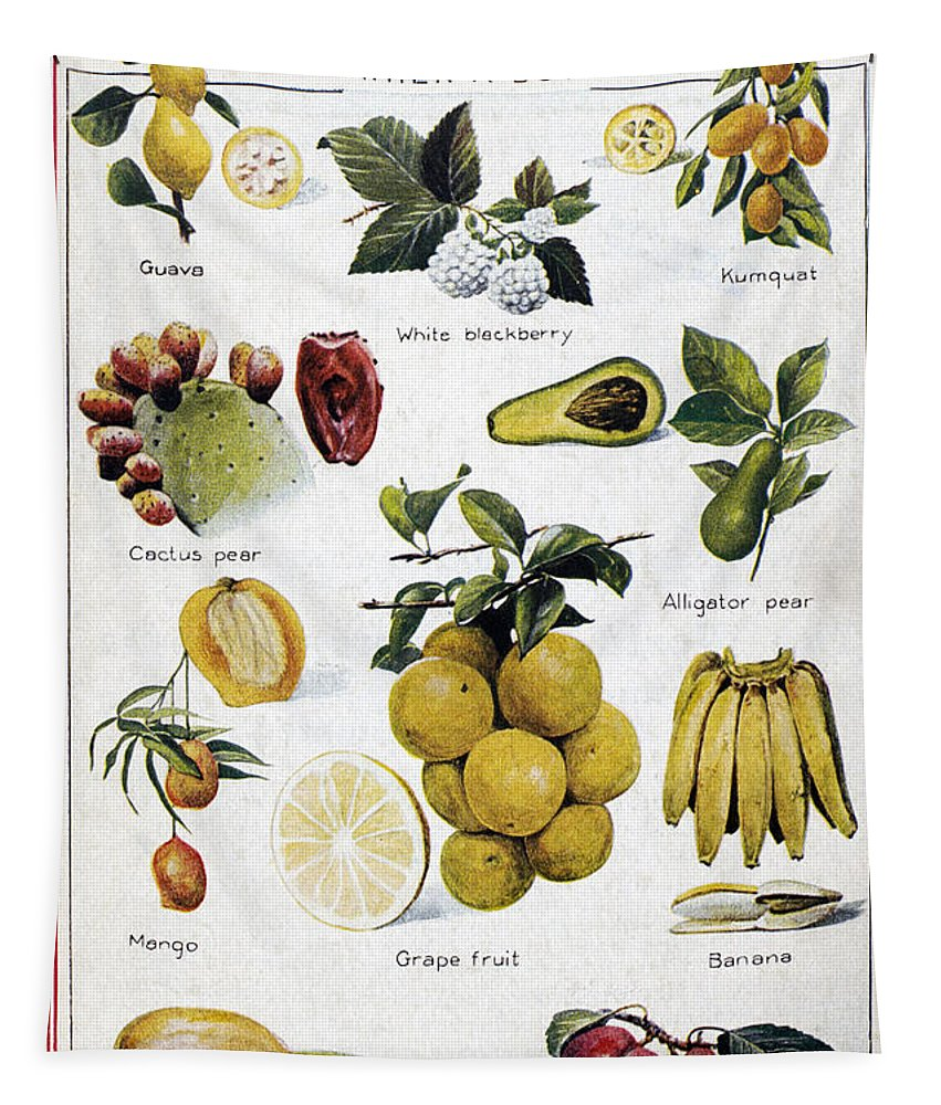 1950 Tapestry featuring the photograph New Fruits, C1950s by Granger