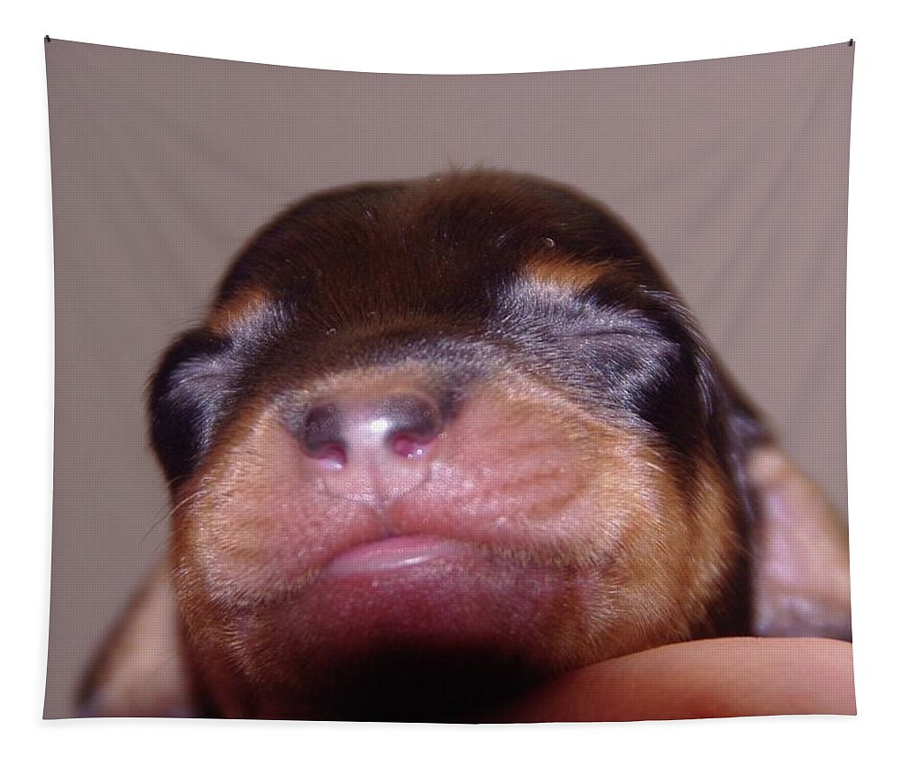 Puppies Tapestry featuring the photograph Newborn Puppy  by Jeff Swan