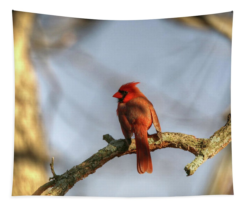 Northern Cardinal Tapestry featuring the photograph Northern Cardinal by Michael Munster