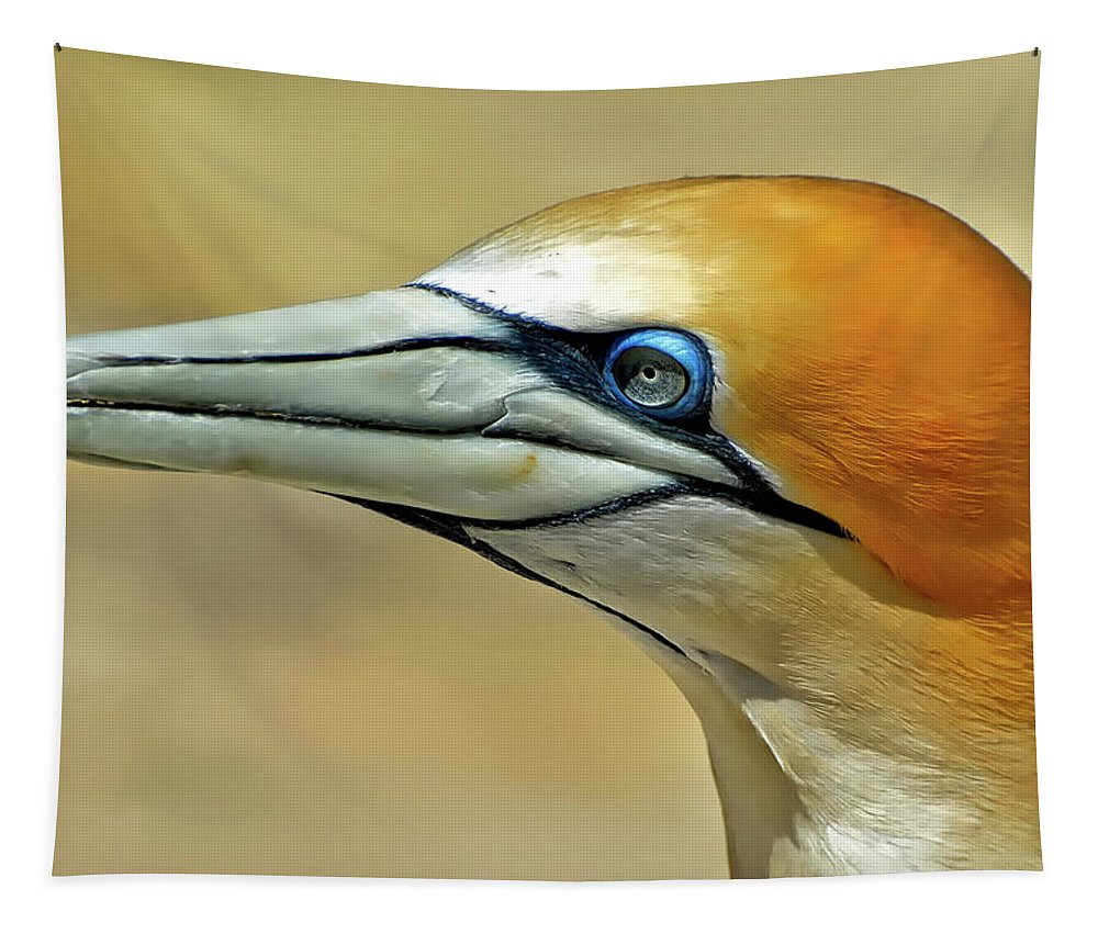 Northern Gannet Tapestry featuring the photograph Northern Gannet by Pixabay