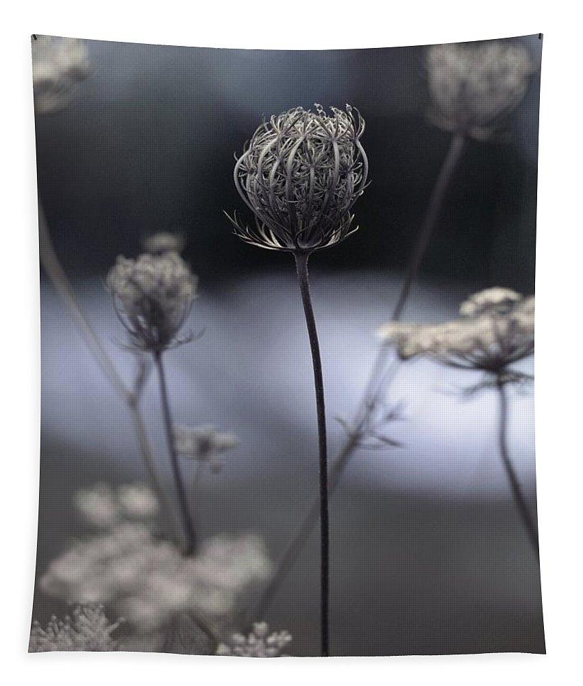 Queen Annes Lace Photograph Tapestry featuring the photograph Still Waiting On The Queen by Gothicrow Images