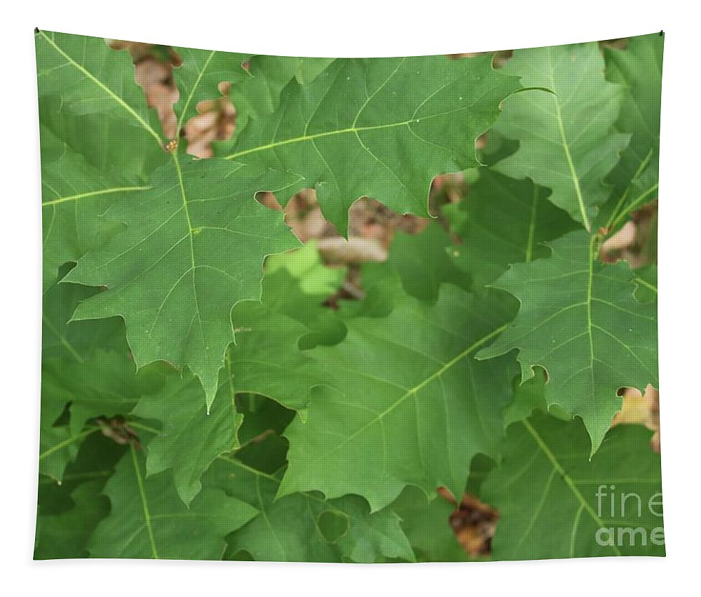 Leaves Tapestry featuring the photograph Oak Leaves by Carol Groenen