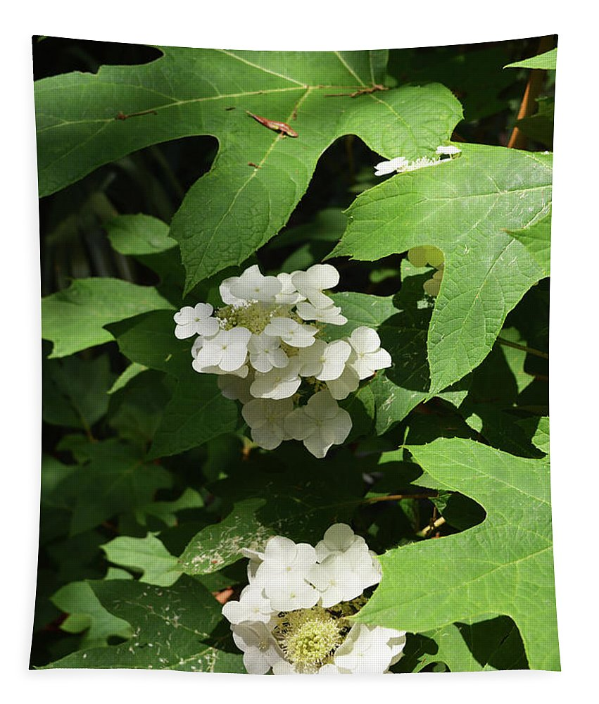 Oakleaf Hydrangea Tapestry featuring the photograph Oakleaf Hydrangea Floral by Aimee L Maher ALM GALLERY