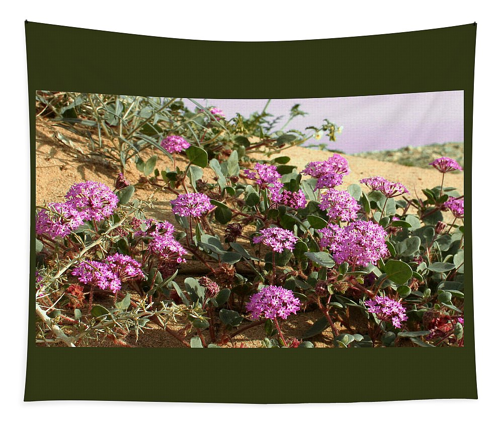 Ocotilla Wells Pink Flowers Tapestry featuring the photograph Ocotilla Wells Pink Flowers 2 by Chris Brannen