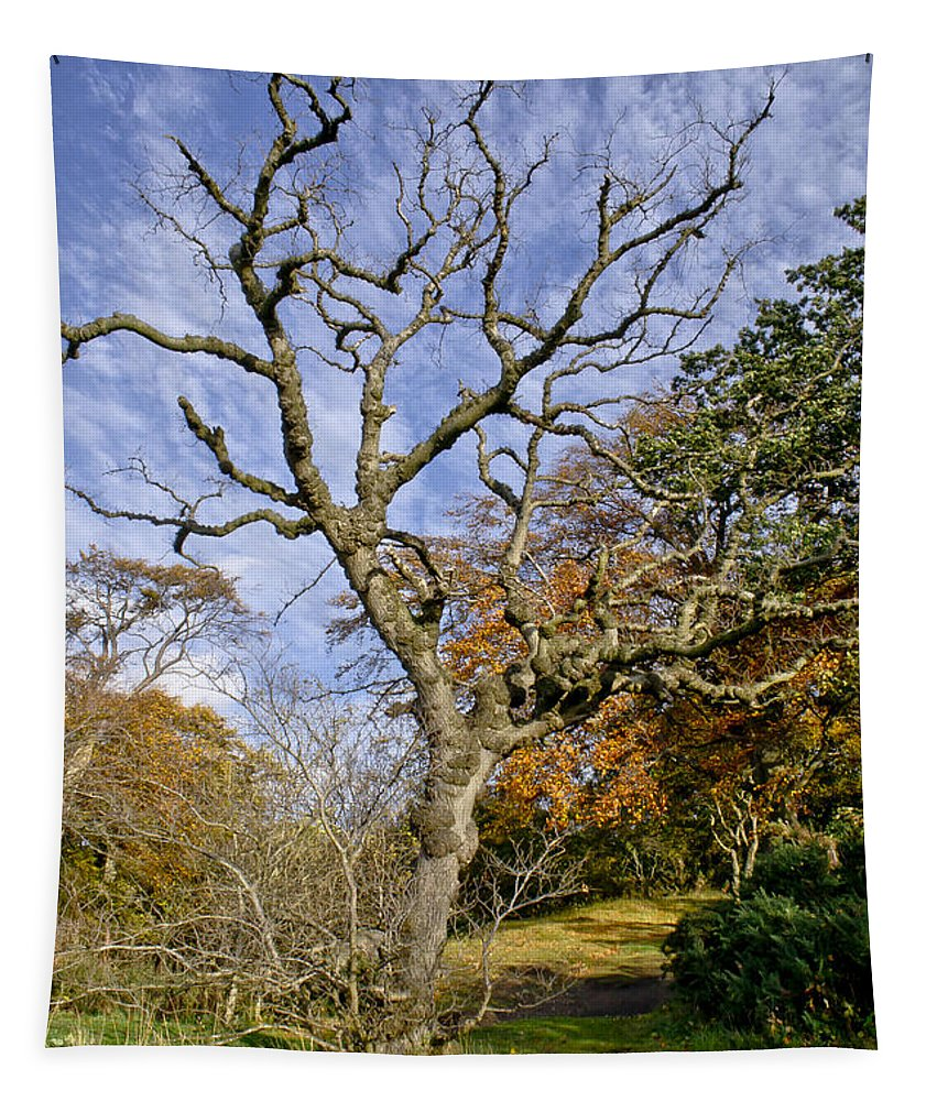 Tree Tapestry featuring the photograph On A Verge Of The Dance. by Elena Perelman