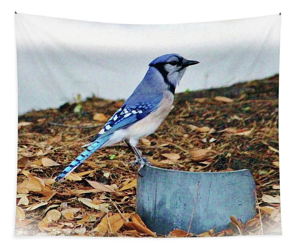 Blue Jay Tapestry featuring the photograph On The Look Out by Cynthia Guinn