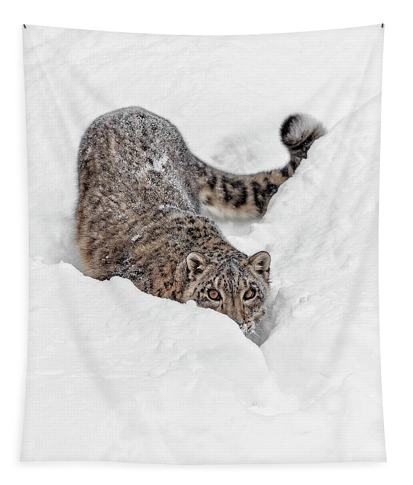 On The Prowl Tapestry featuring the photograph On The Prowl by Wes and Dotty Weber