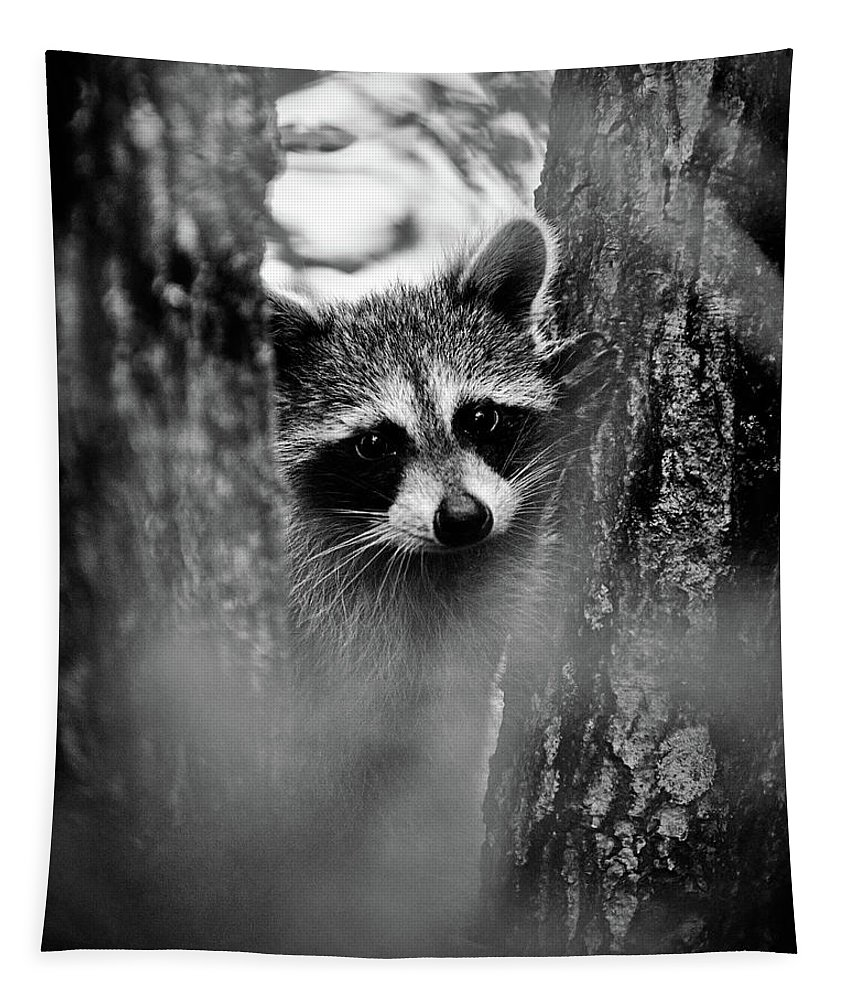Racoon Tapestry featuring the photograph On Watch - Bw by Christopher Holmes