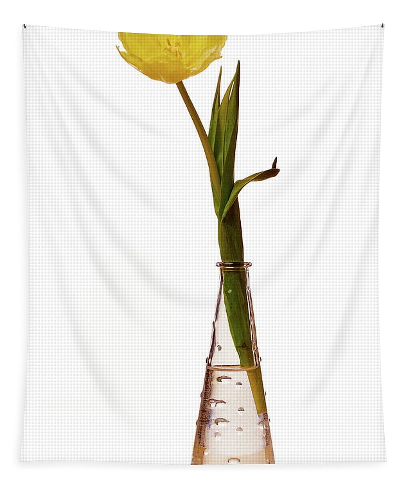 Finland Tapestry featuring the photograph One Yellow Tulip by Jouko Lehto