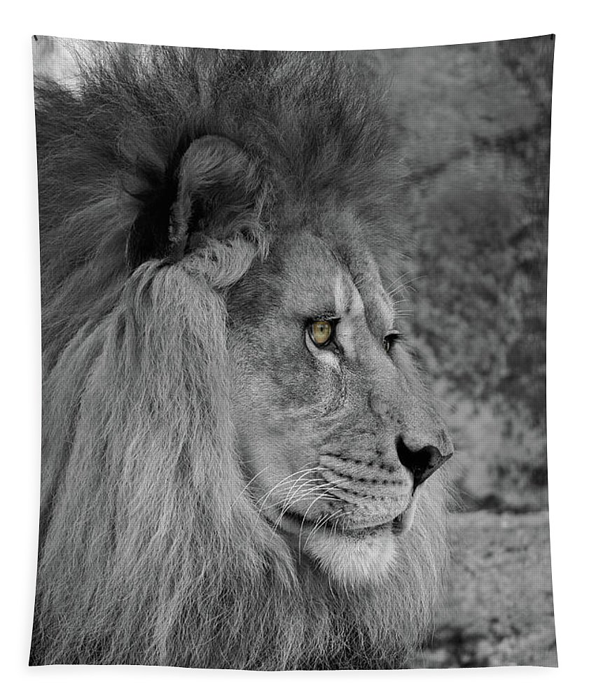 Lion Tapestry featuring the photograph Onyo #17 Black And White T O C by Judy Whitton