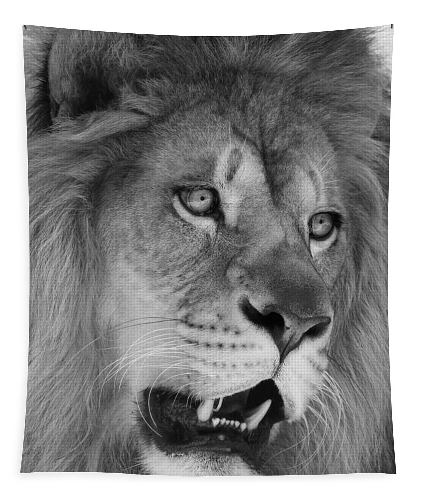Lion Tapestry featuring the photograph Onyo #6 Black And White by Judy Whitton