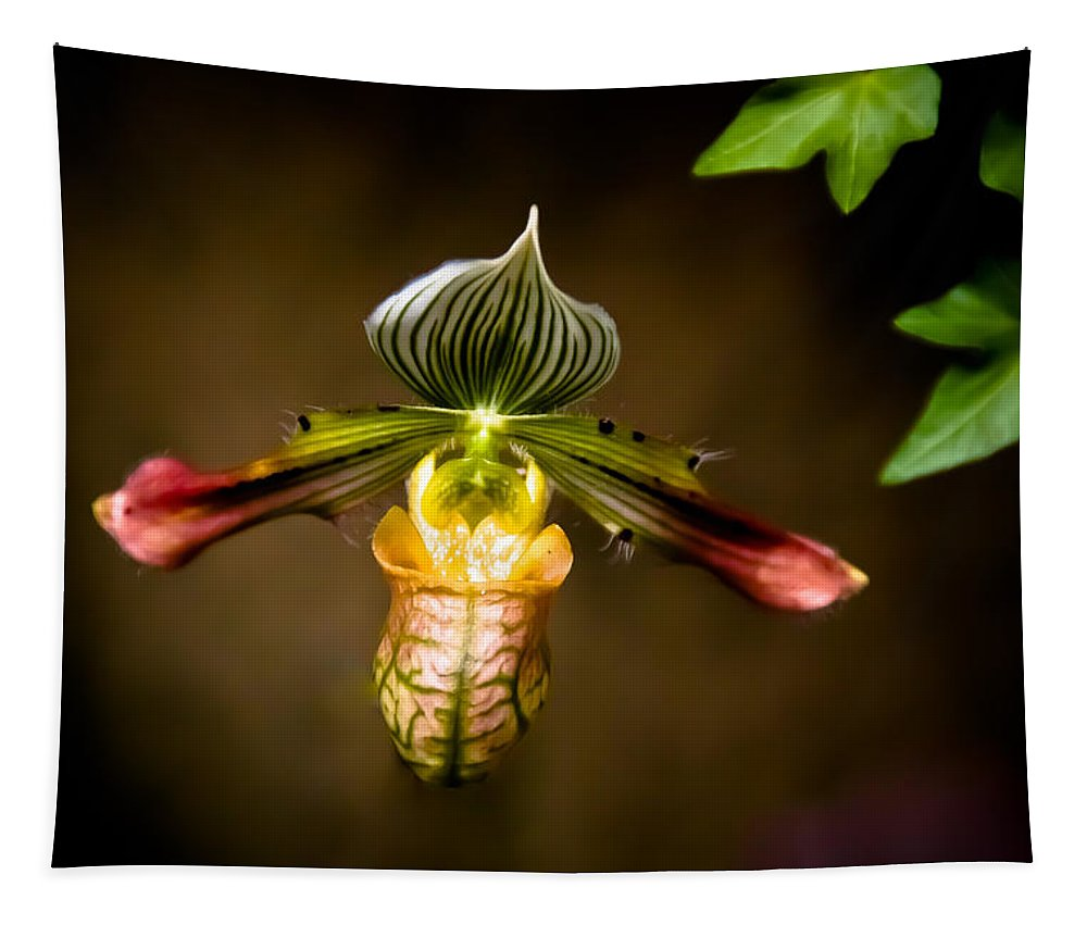 Flower Tapestry featuring the photograph Oprah's Orchid by Trish Tritz