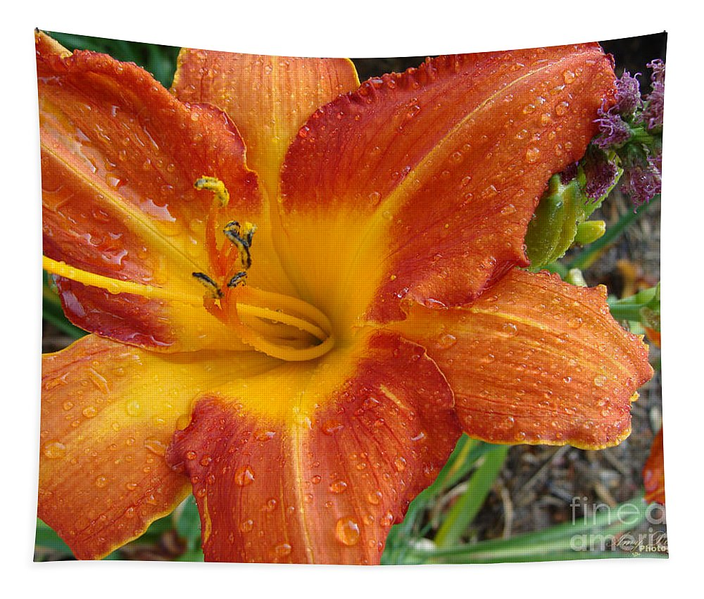 Daylily Tapestry featuring the photograph Orange Daylily With Dew by Amy Dundon