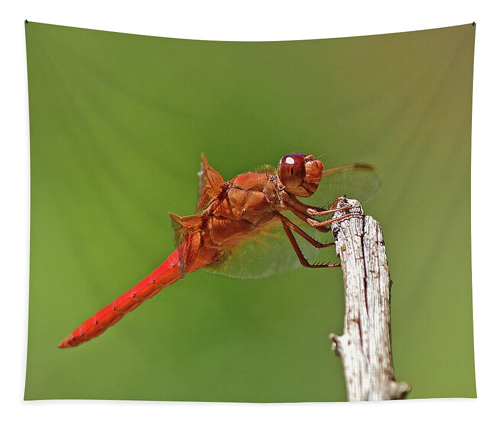Linda Brody Tapestry featuring the photograph Orange Dragonfly Holding On I by Linda Brody