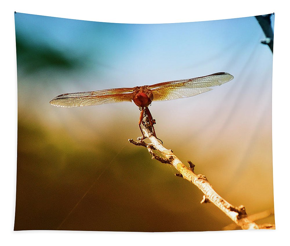Linda Brody Tapestry featuring the photograph Orange Dragonfly Wings I by Linda Brody