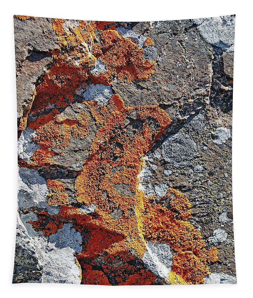 Lichen Tapestry featuring the photograph Orange Lichen by Debbie Oppermann