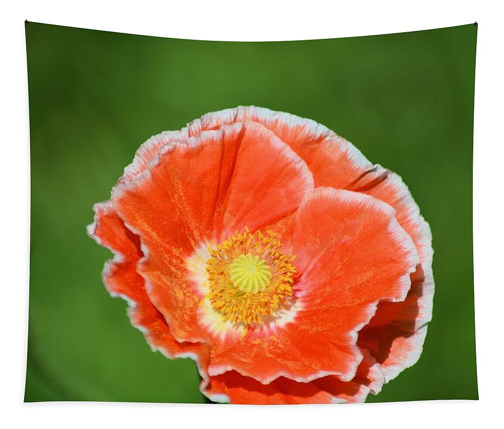 Poppy Tapestry featuring the photograph Orange Poppy 2 by Bonfire Photography