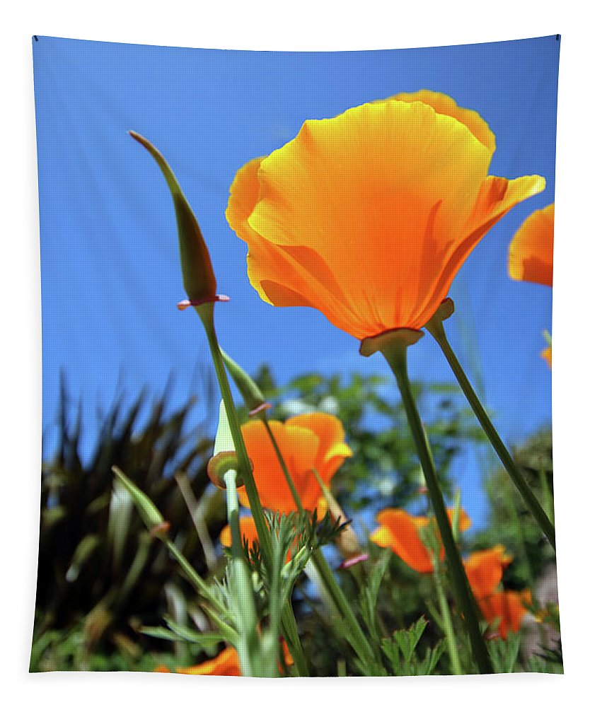 Poppy Tapestry featuring the photograph Orange Poppy Blue Sky by Terri Waters