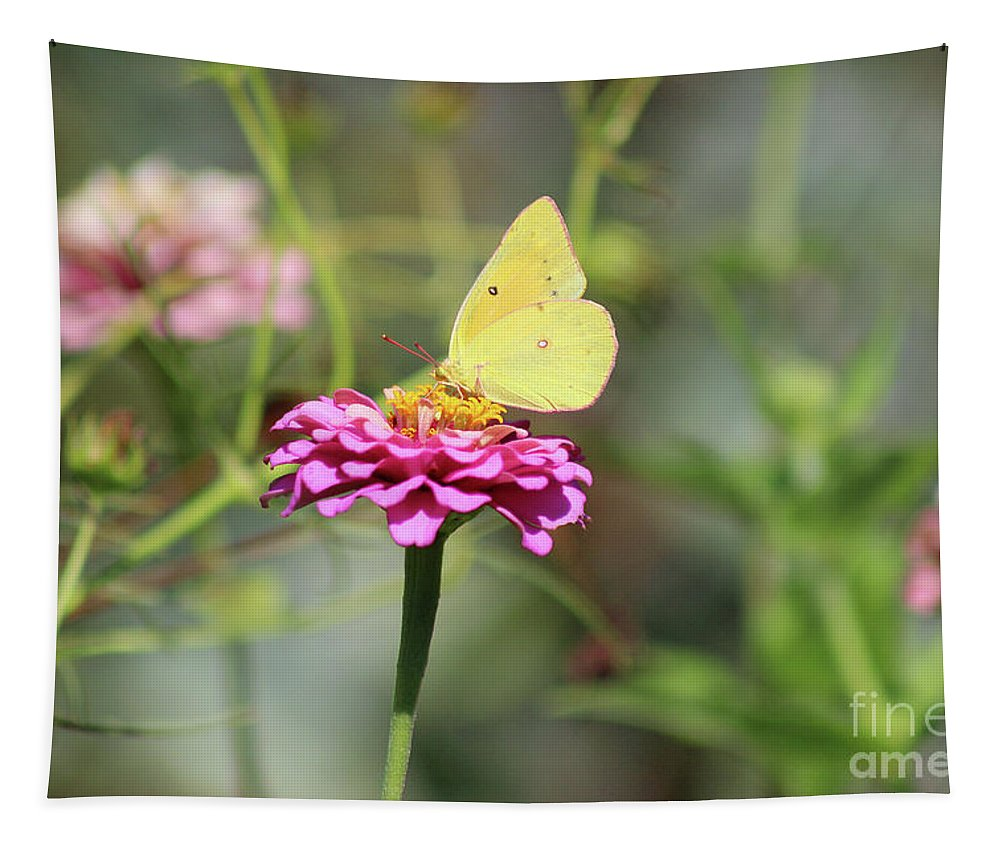 Butterfly Tapestry featuring the photograph Orange Sulphur Butterfly In Garden by Karen Adams