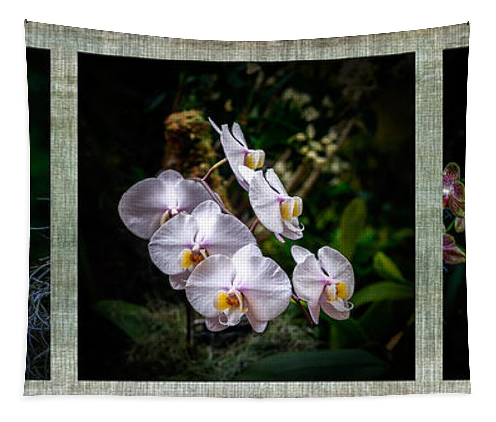 Orchid Tapestry featuring the photograph Orchid 1 Triptych by Greg Kluempers